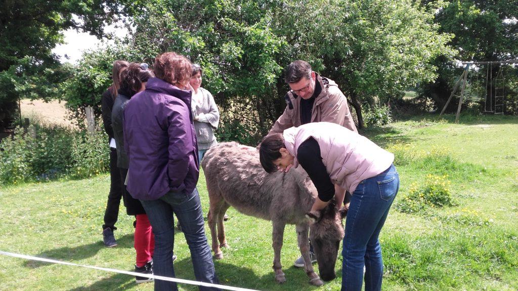 Formation à la médiation animale autour de l'âne avec Emmanuel Doumalin