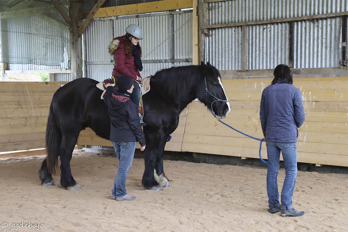 L'équithérapie est une composante du métier d'intervenant en médiation par l'animal