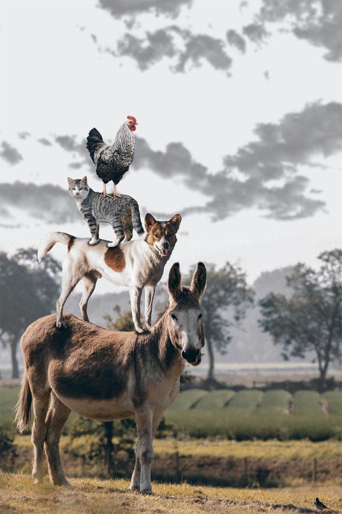 les animaux au coeur de la zoothérapie