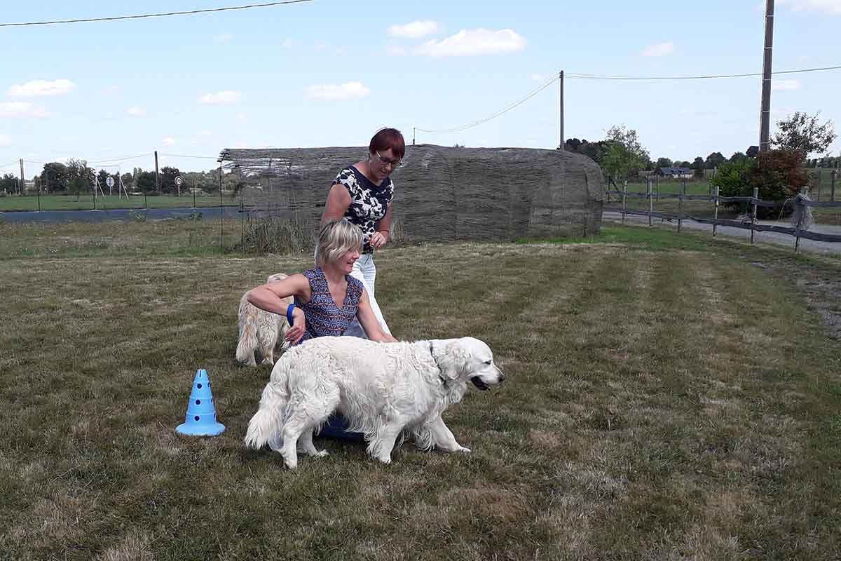 Formation d'intervenant technique à la médiation animale avec chien