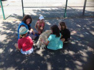 Retour d'expérience sur la formation technique à la médiation animale