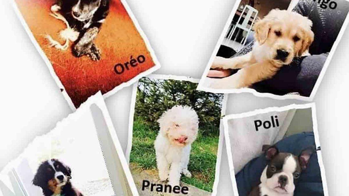 nouveaux animaux formation praticien spécialisé médiation par l'animal umanima formation